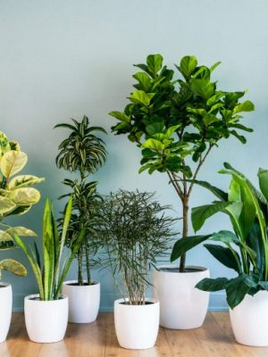 house-plants2