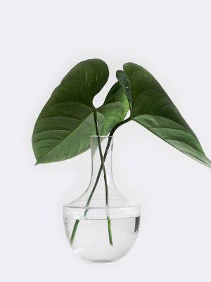 plant1-free-img