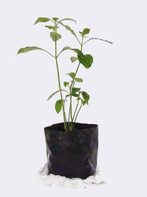 plant2-free-img